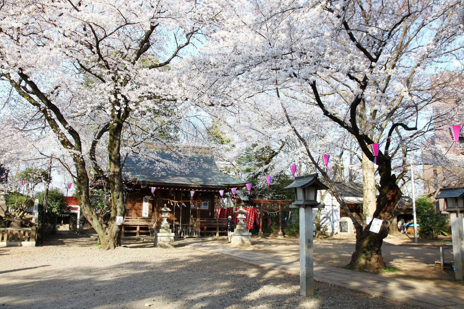 桜と敷島神社 埼玉の風景