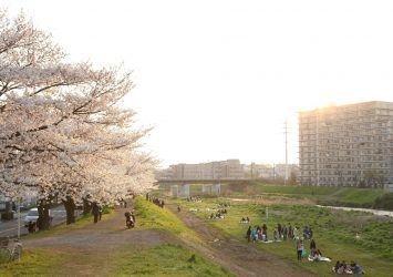 柳瀬川の桜の風景 埼玉の風景