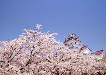 会津若松城と福島の桜 福島の風景
