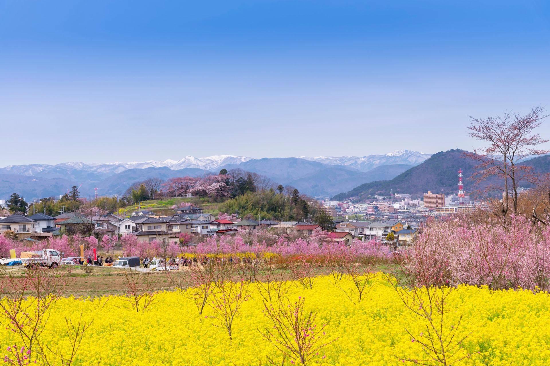 花見山公園の風景 福島の風景