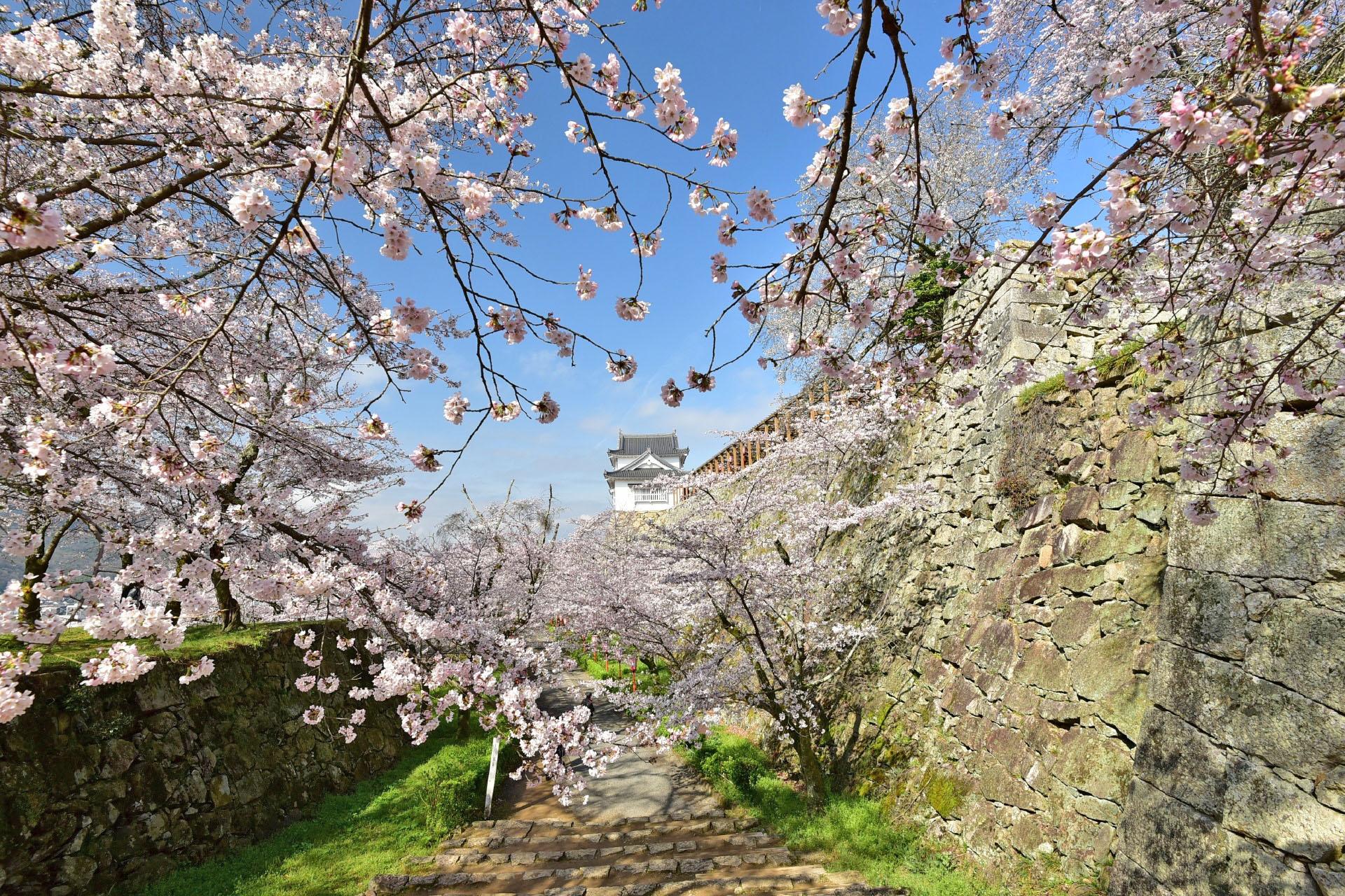 桜と津山城の風景 岡山の風景