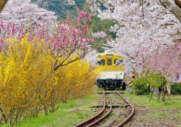 春の「安野花の駅公園」 広島の風景