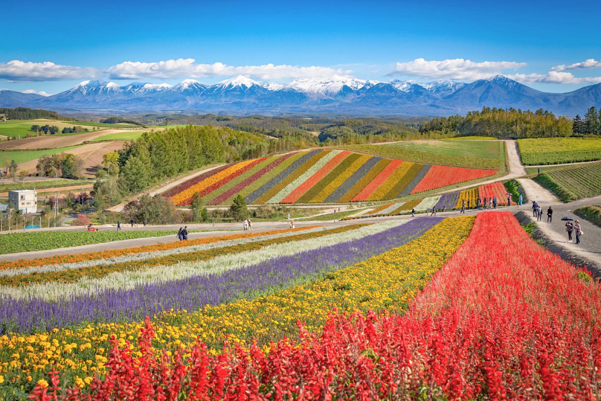 色とりどりの花畑の光景 北海道の風景
