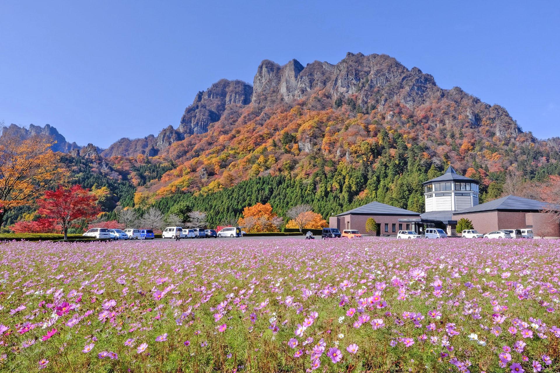 コスモスと妙義山 群馬の風景