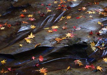 梅ヶ谷の紅葉 千葉の風景