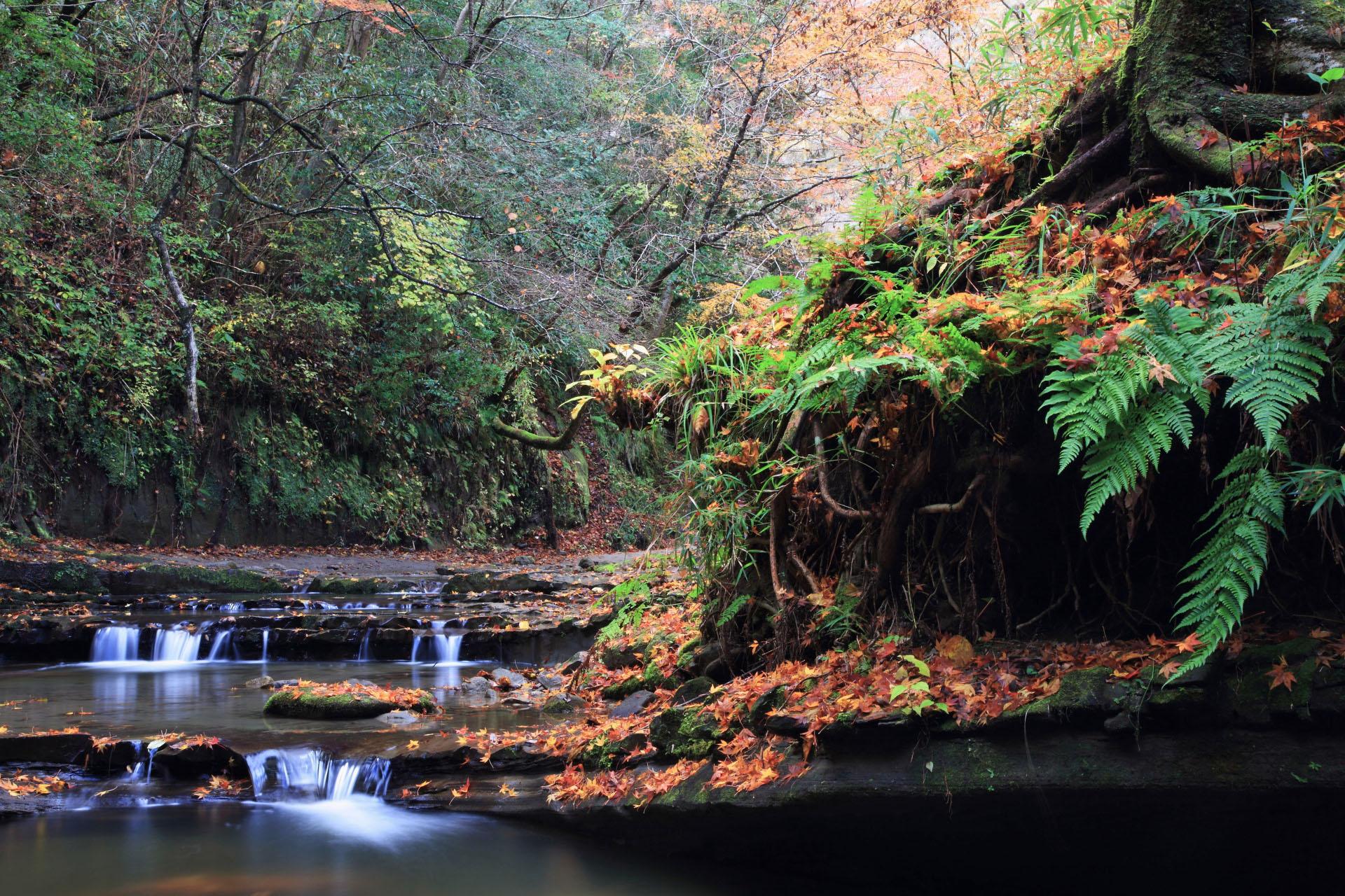 秋の梅ヶ瀬渓谷 千葉の風景