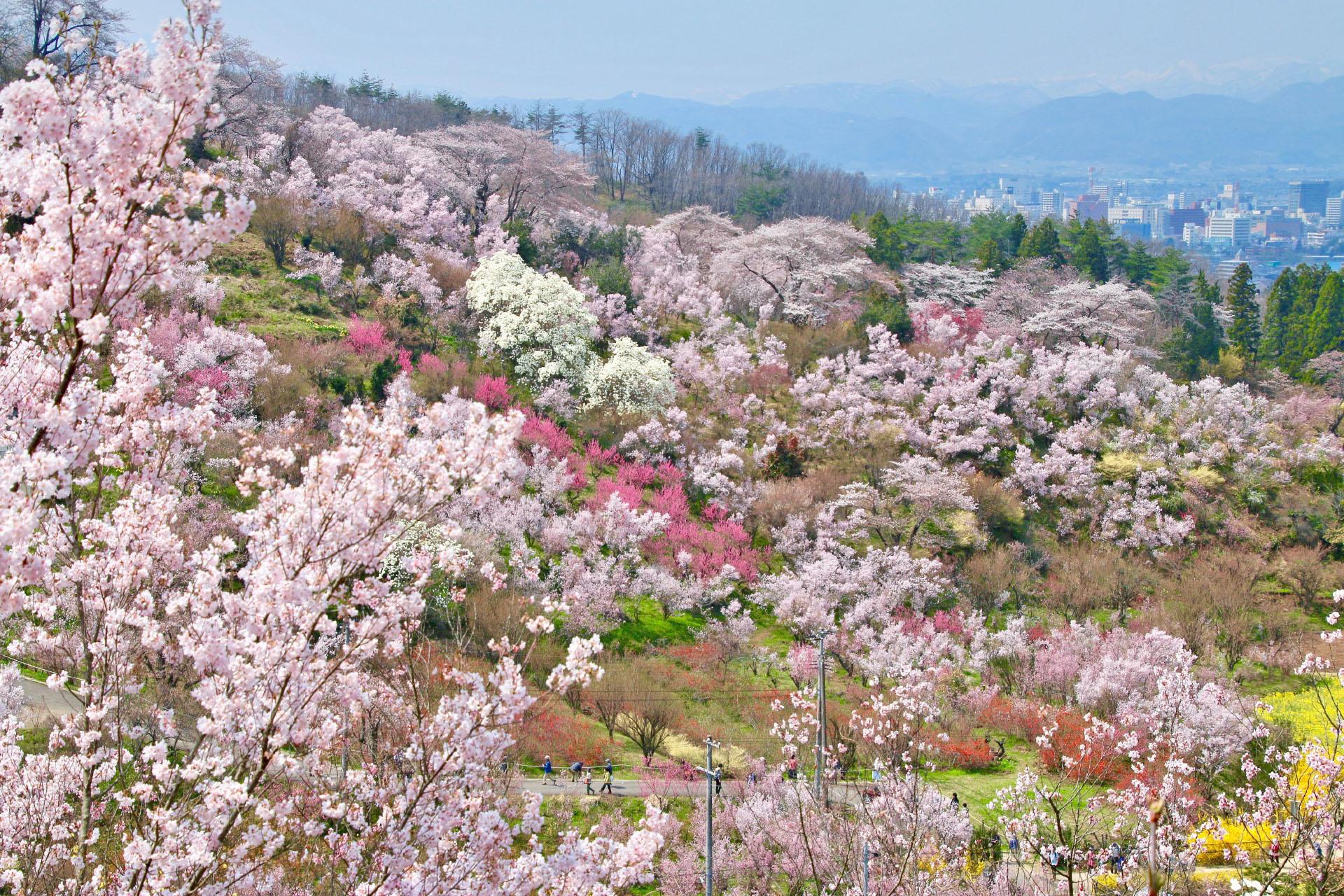花見山の春の風景 福島の風景