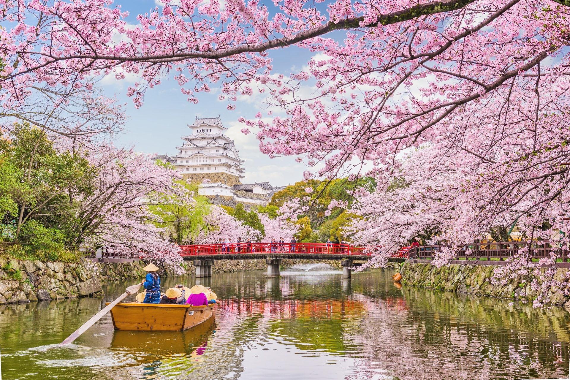 春の姫路城 桜と姫路城の風景 兵庫の風景