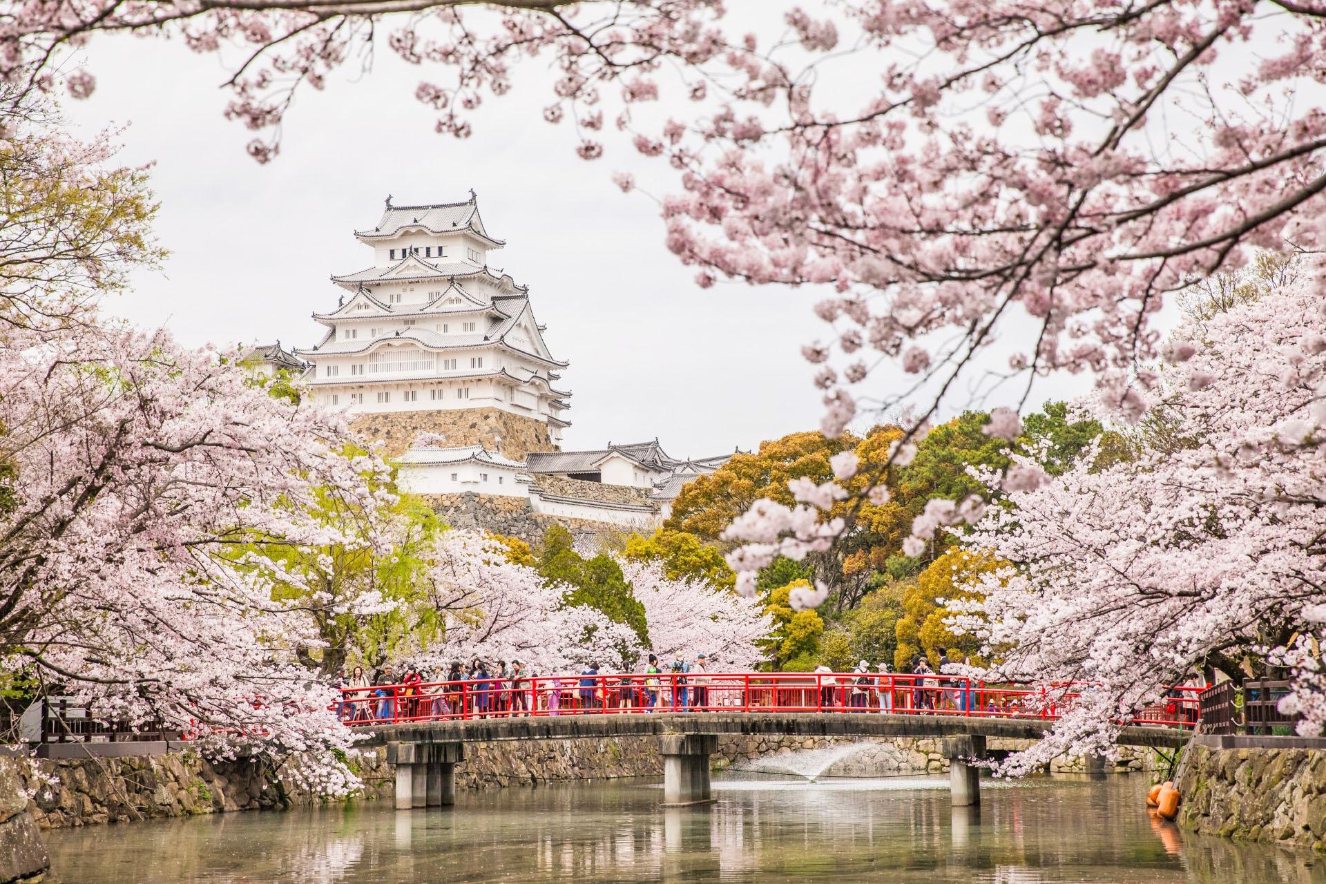 白鷺城と桜の風景 姫路城 兵庫の風景