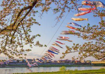 桜と鯉のぼりの風景 岩手の風景