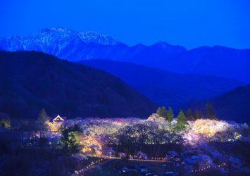 高遠城址公園の桜とアルプス 長野の風景