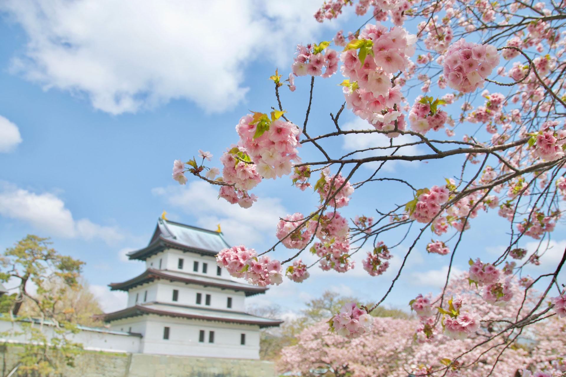 松前城と桜 北海道の風景
