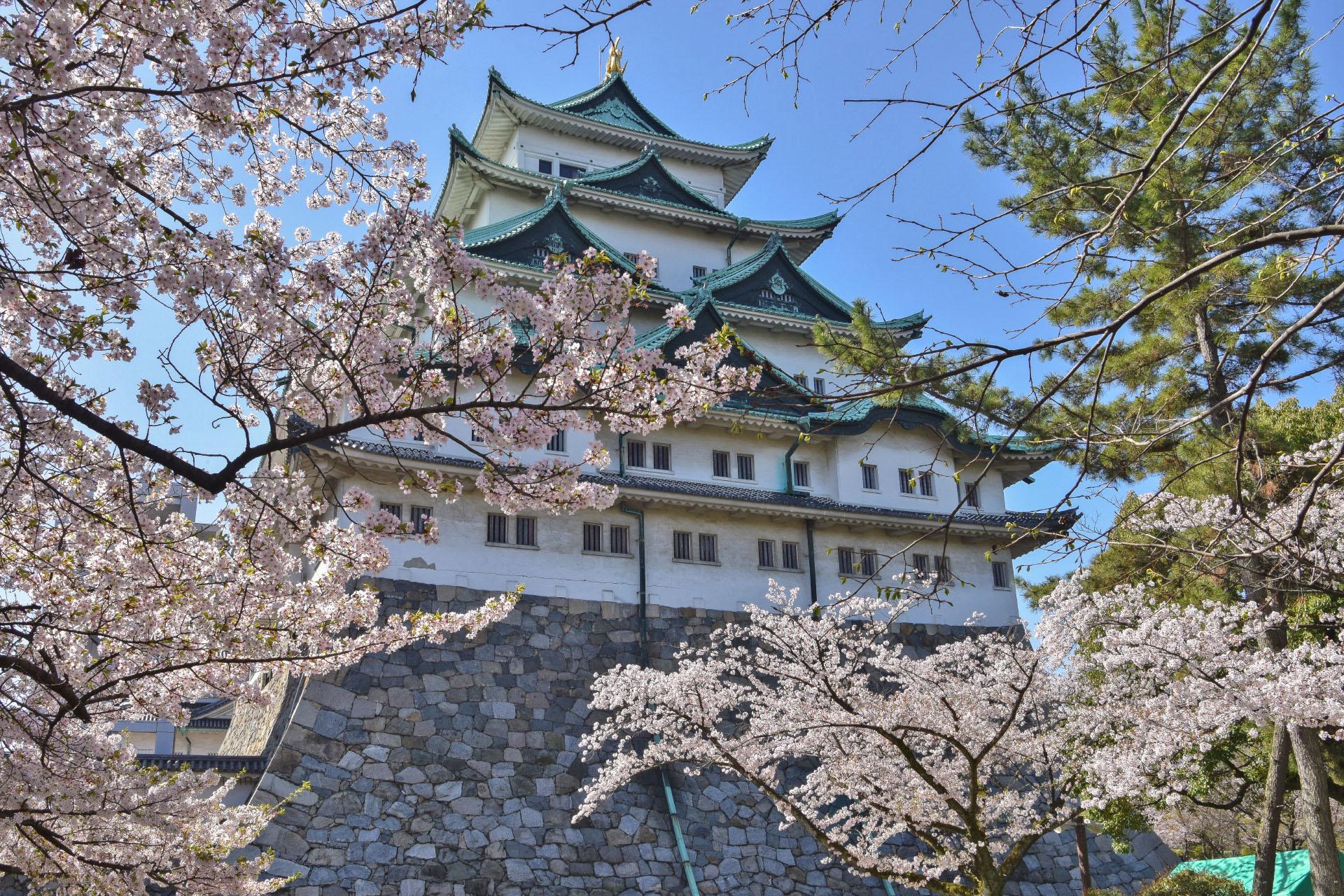 名古屋城と桜 愛知の風景