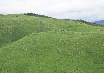 秋吉台の風景 山口の風景