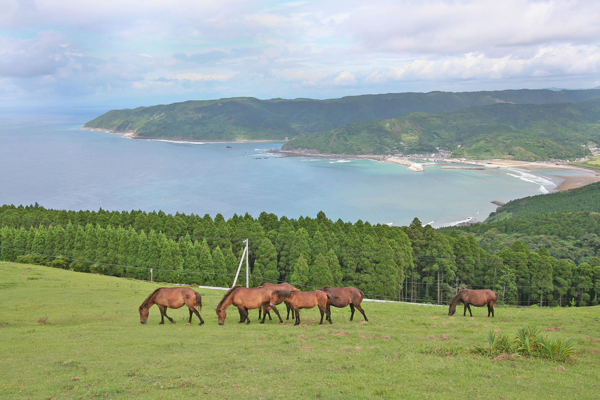 都井岬の風景 宮崎の風景