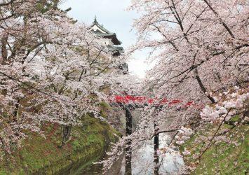 春の弘前城 桜と弘前城の風景 青森の風景