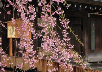 春の角館の風景 桜と角館の町並み 秋田の風景