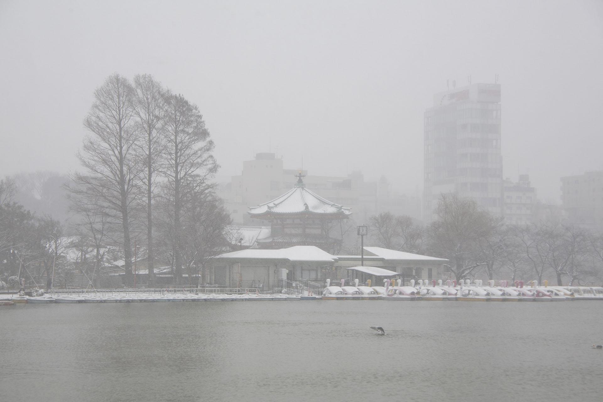雪の日の不忍池の風景 東京の風景