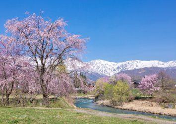 春の白馬の風景 長野の風景