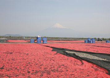 富士山と桜海老 静岡の風景