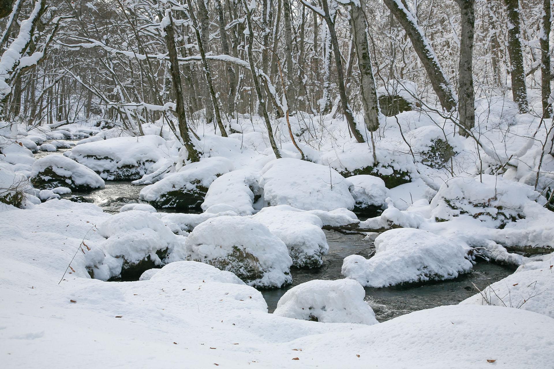 冬の奥入瀬渓流 青森の風景