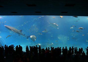 美ら海水族館 沖縄の風景