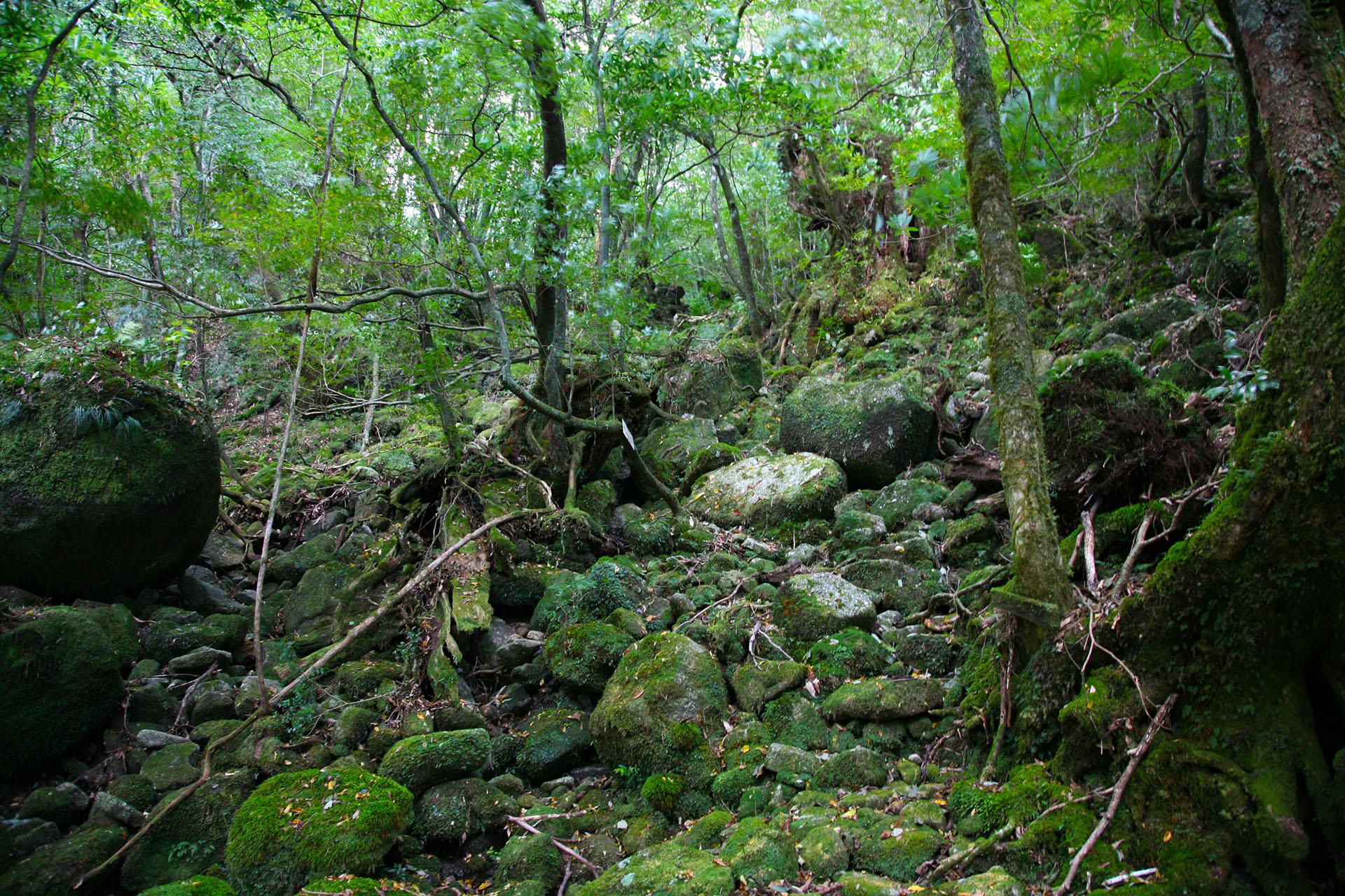 屋久島の風景 鹿児島の風景