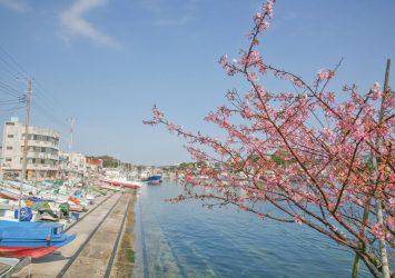 三浦半島の初春の風景 神奈川の風景