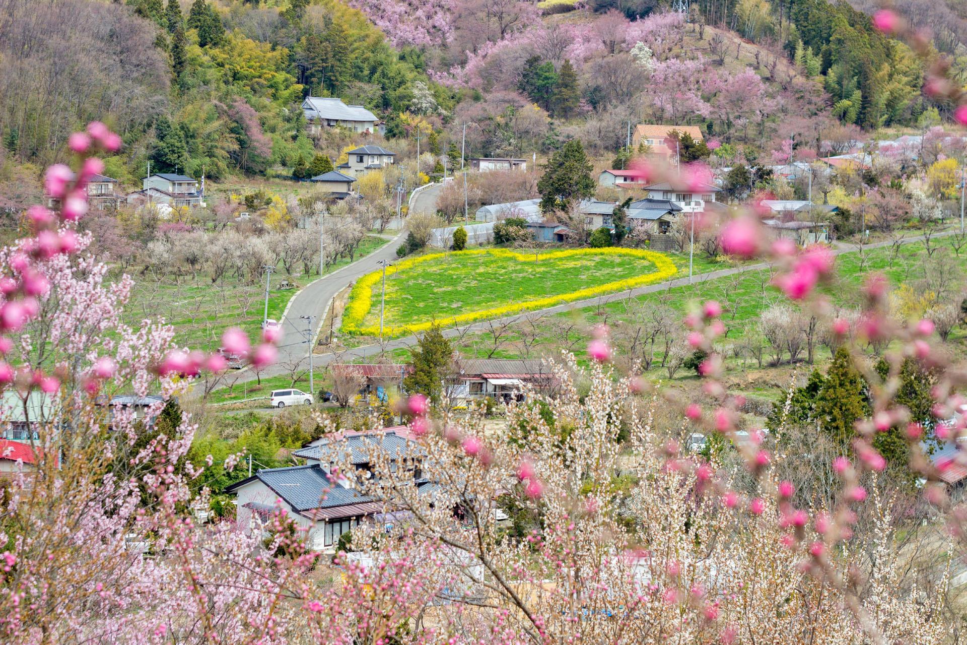 春の花見山公園 福島の風景