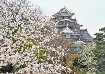 桜と岡山城 岡山の風景
