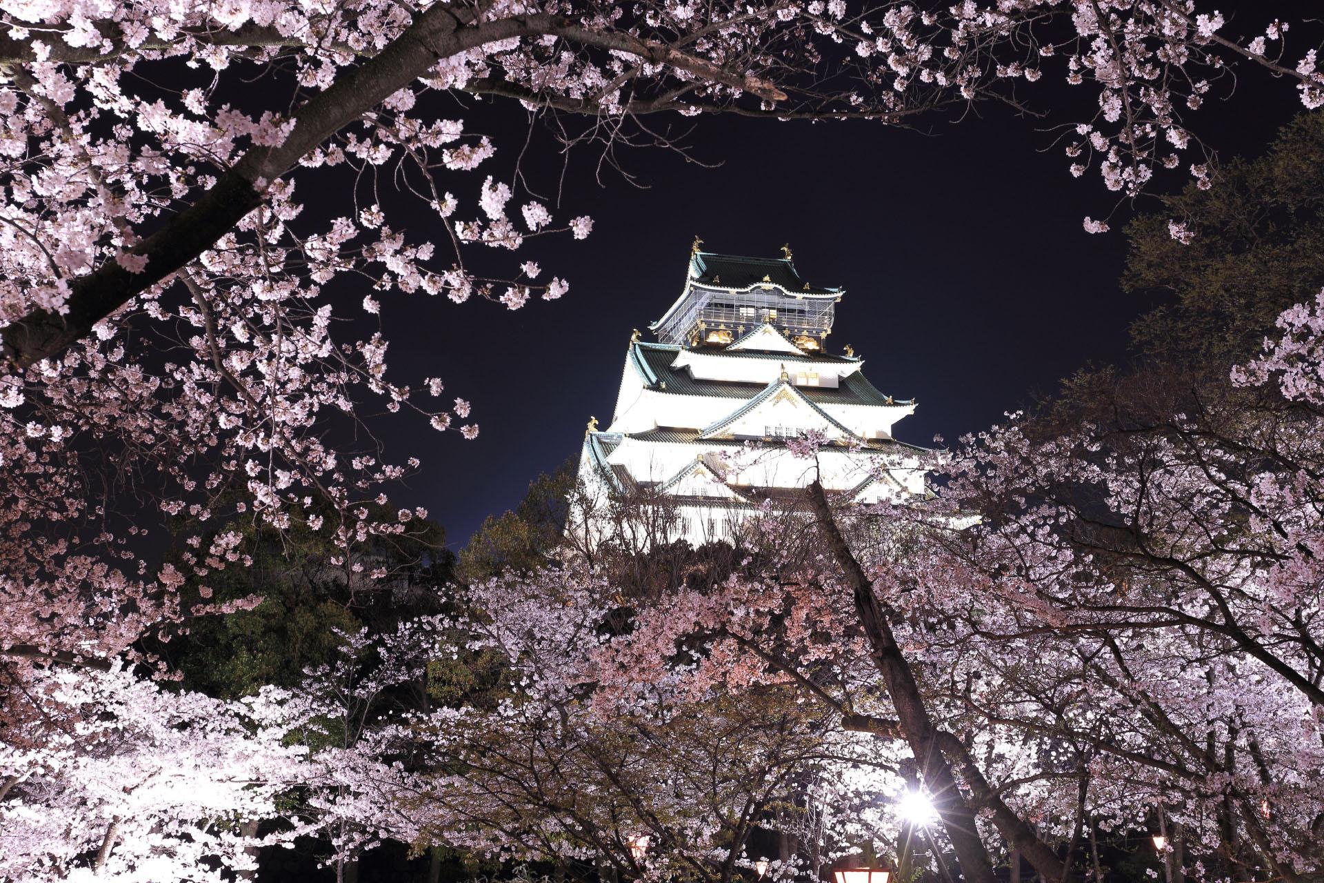 夜の大阪城と桜 大阪の風景