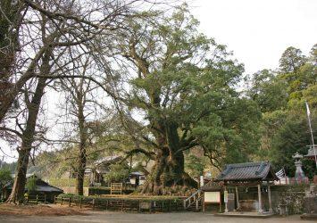 蒲生の大楠 鹿児島の風景