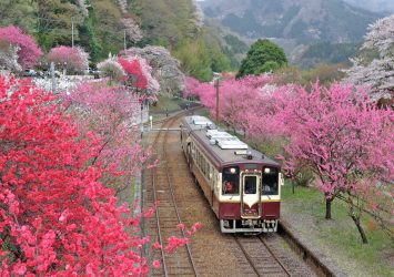 春の神戸駅 花桃の風景 群馬の風景