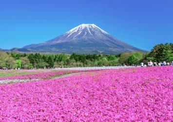 芝桜と富士山の風景 山梨の風景