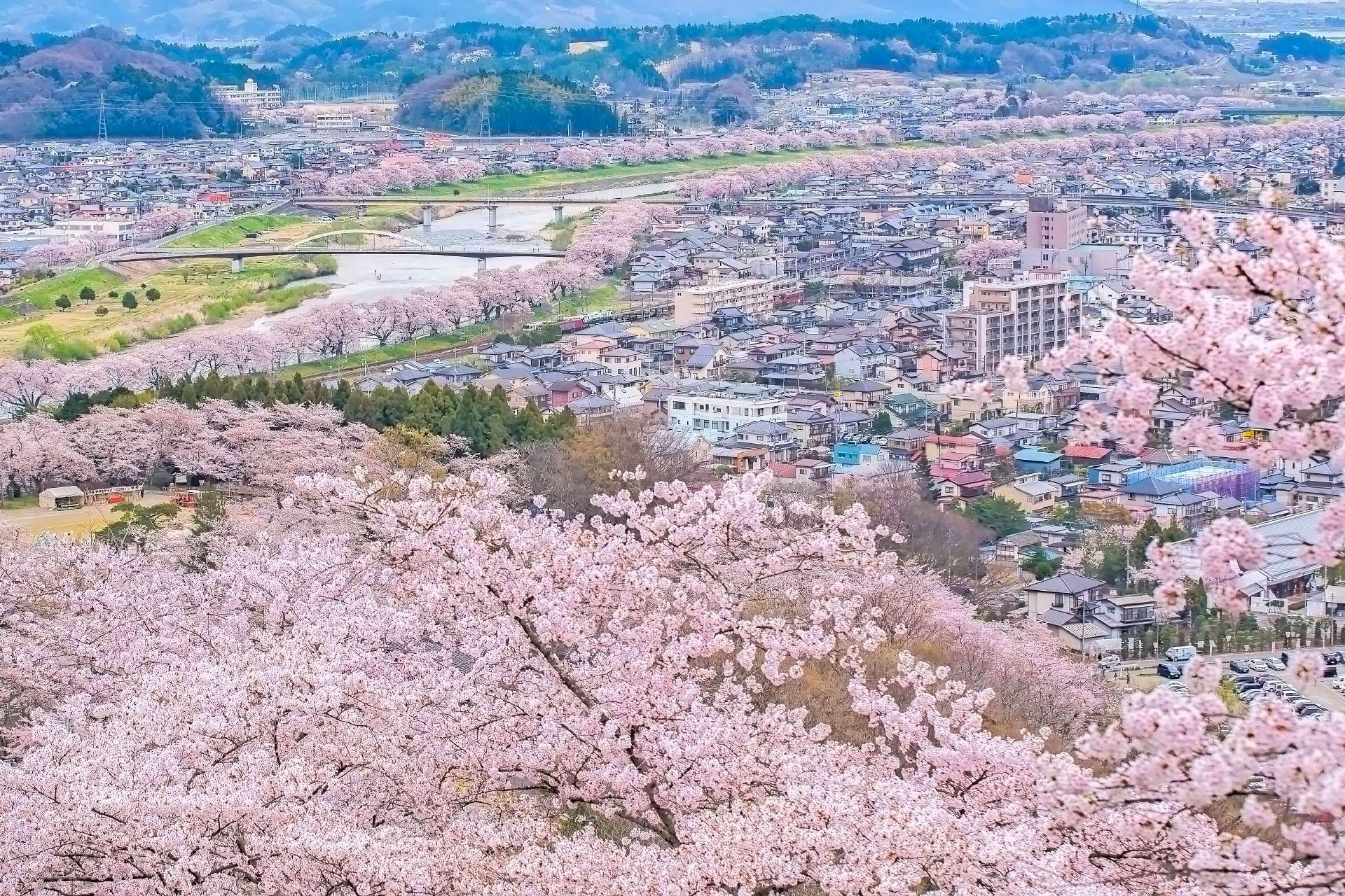 宮城の桜の名所 船岡城址公園の桜の風景 宮城の風景