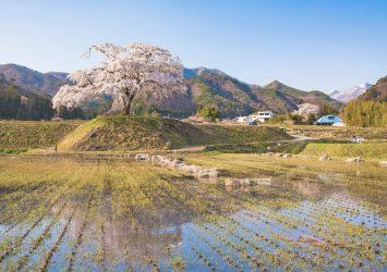 上発知のしだれ桜 群馬の風景