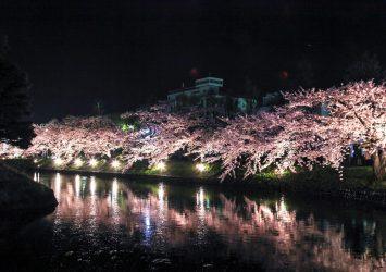 松本城のお堀と夜桜の風景 長野の風景