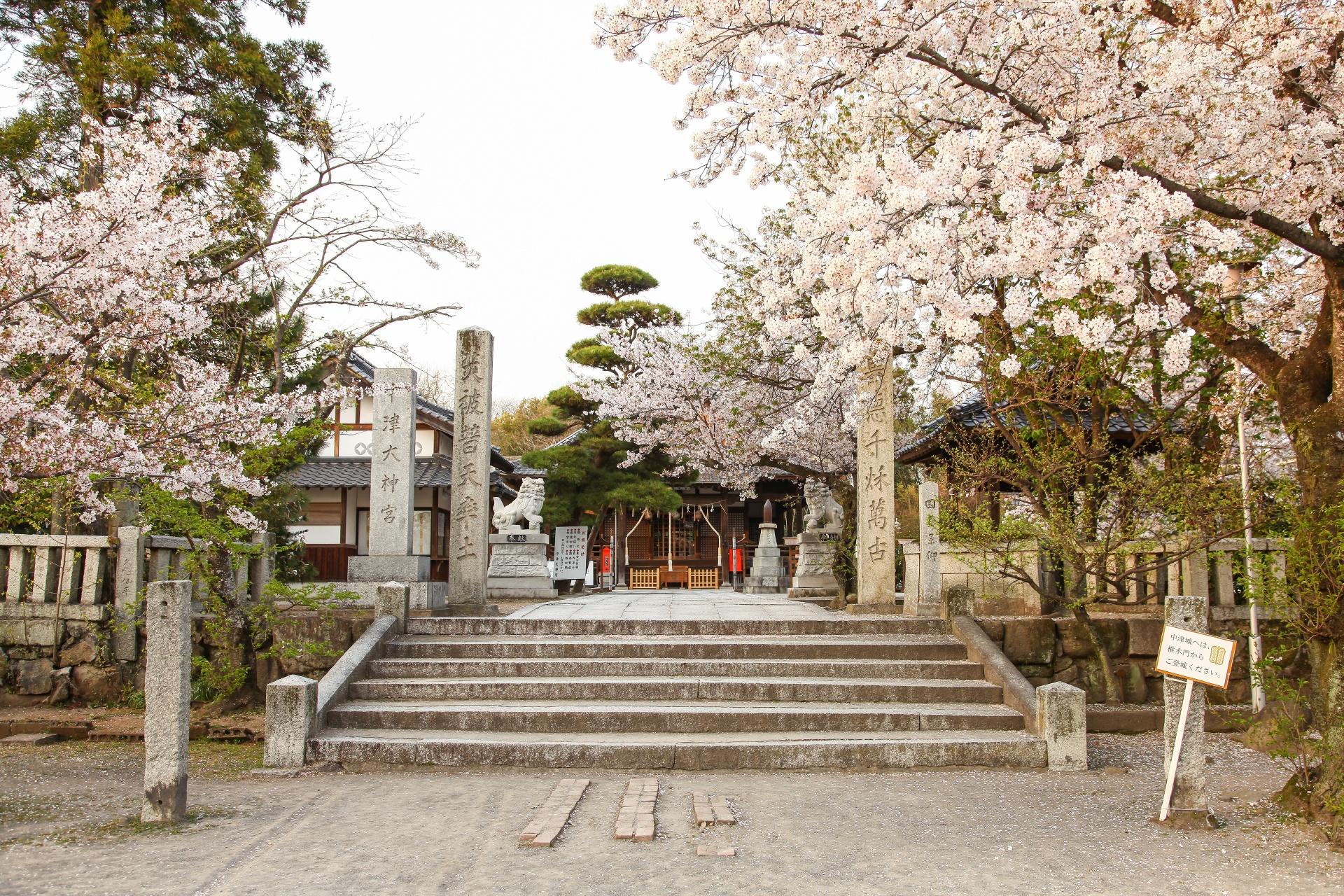 中津大神宮と桜の風景 大分の風景