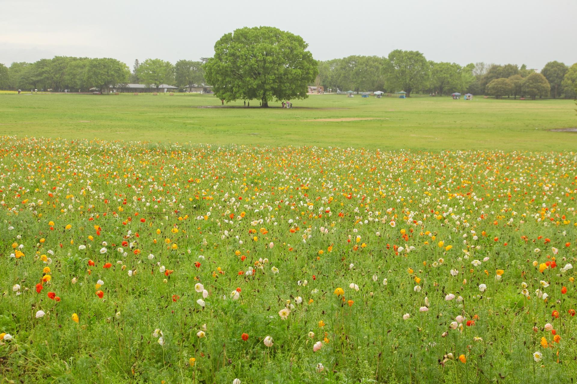 国営昭和記念公園の風景 東京の風景