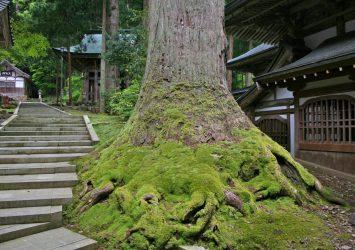 五月の永平寺 福井の風景