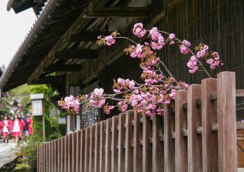 春の馬籠宿の風景 岐阜の風景