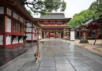 太宰府天満宮とネコ 福岡の風景