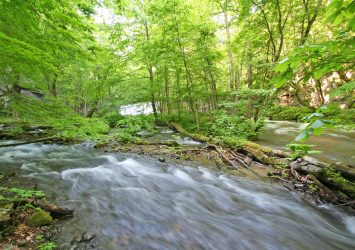 夏の奥入瀬渓流 青森の風景