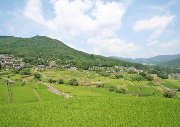 坂折棚田の風景 岐阜の風景
