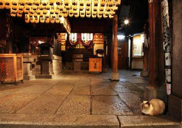 夜の法善寺横丁 大阪の風景
