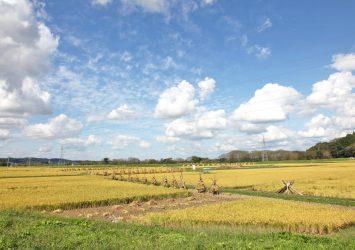 秋の田園風景 岩手の風景