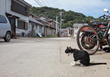 猫のいる風景 真鍋島 岡山の風景