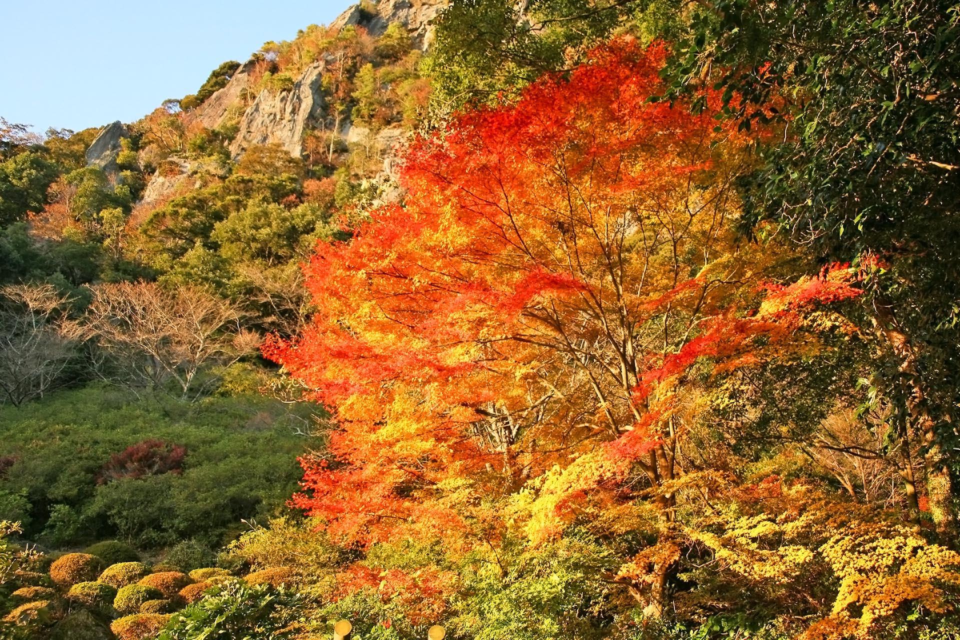 御船山楽園の紅葉 佐賀の風景