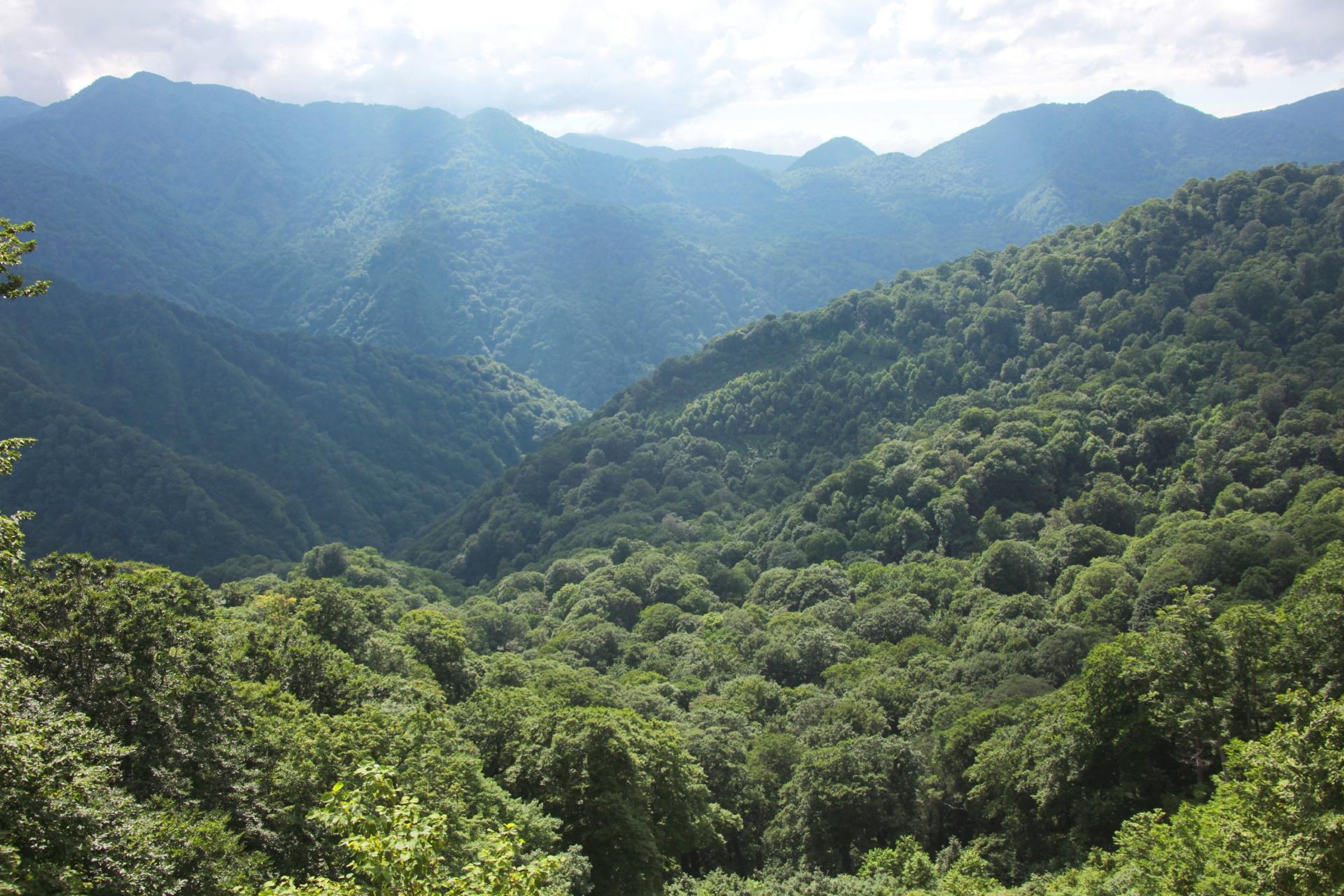 白神山地の風景 青森の風景