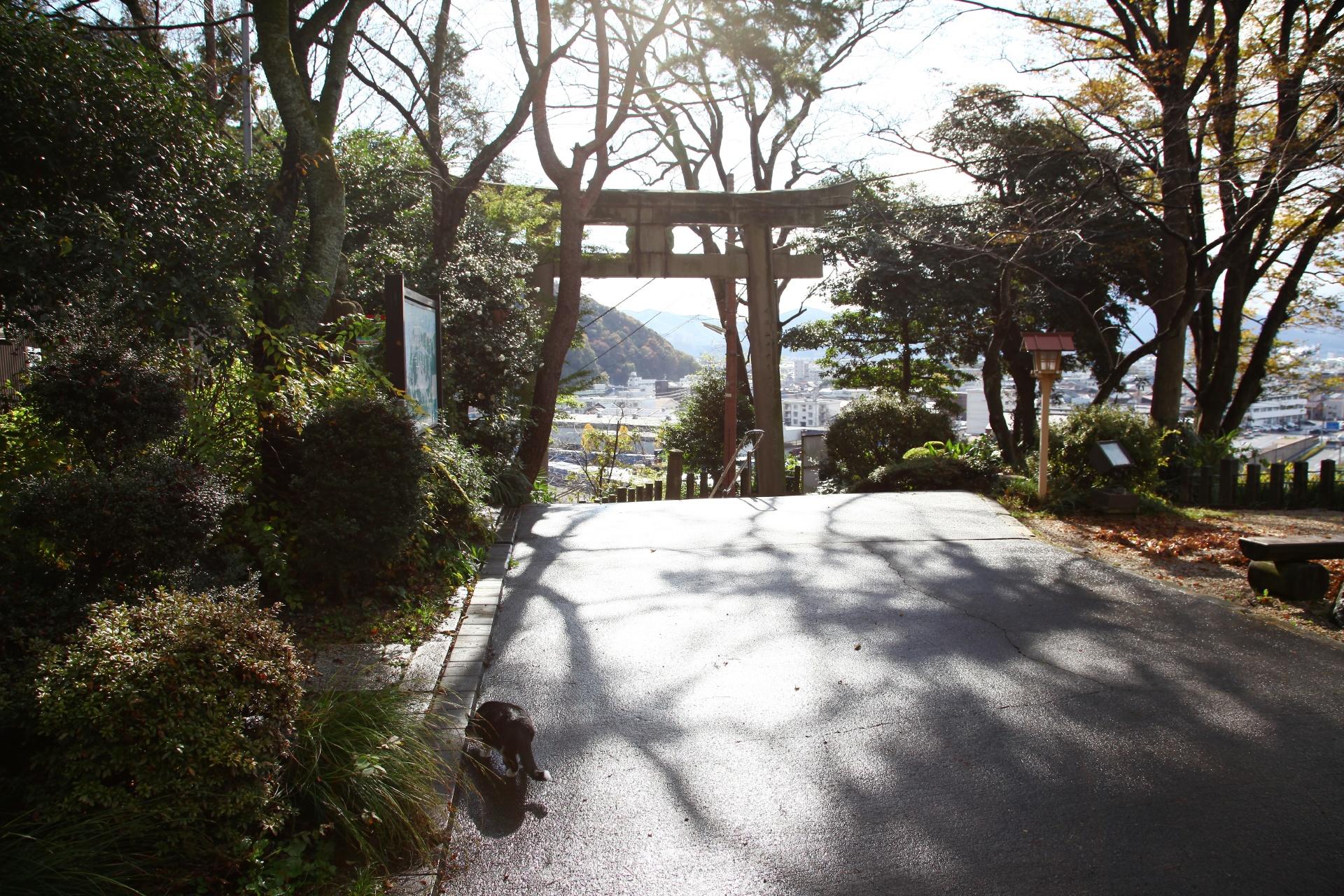 秋の金崎宮 福井の風景